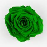 Rose Petrol