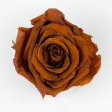 Rose Brown
