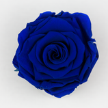 Rose Midnightblue