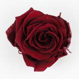 Rose Burgund