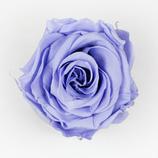 Rose Lightskyblue
