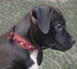 Hundehalsband mit oder ohne Name