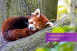 "Fotokurs ""Zoosafari"" Wuppertal"