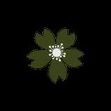 Matizador mate Verde oscuro