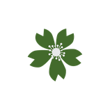 Matizador mate  verde laurel