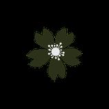 Matizador mate verde eucalipto