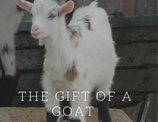 Gift a Goat