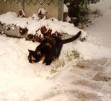 Minni im Schnee