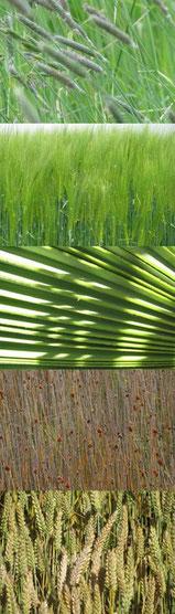 grassen 40 x 140 cm