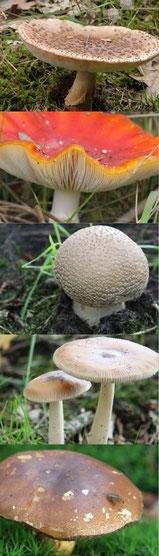paddenstoelen 40 x 140 cm
