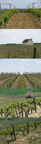 wijngaarden 40 x 140 cm