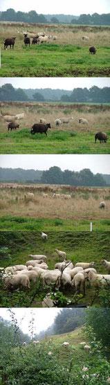 schapen Pieterpad               40 x 140 cm