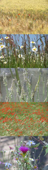 kleine bloempjes 40 x 140 cm