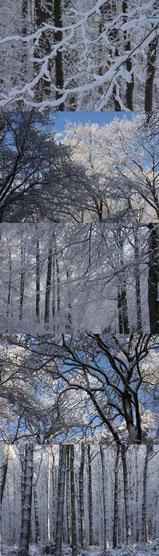 besneeuwde bomen 40 x 140 cm