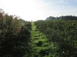Bild: Heidelbeerplantage Hof Vinnemann