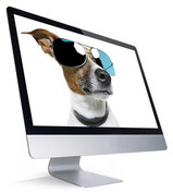 website4everyone dog