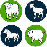 Rotaviren bei Schweine und Ferkel