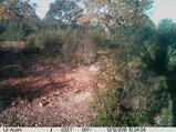 Foto Ltl Acorn 3310 IR invisibles. Distancia 6-8 metros
