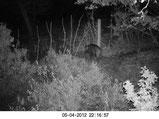 Foto W321H a 12 metros de distancia