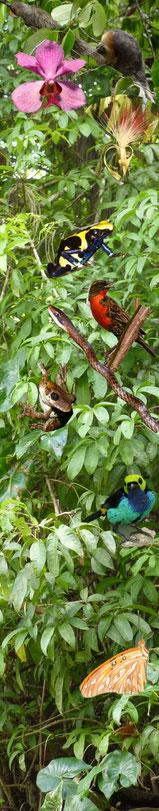 Découverte de la flore et de la faune de guyane