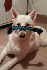 Tierspielzeug Hund Katze