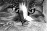 Lyzzzart - dessin graphite fusain wb noir et blanc