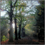 woods & trees