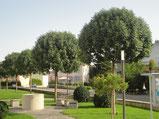 , Amriswl, Galerien, Garten, Gartengestaltung, Lorandi, Bäume, Hochstamm