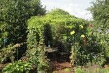 , Amriswl, Galerien, Garten, Gartengestaltung, Lorandi, Pergola