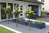 Wasserbecken, Amriswl, Galerien, Garten, Gartengestaltung, Lorandi