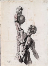 Anatomie Kunst