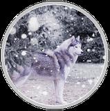 chien blog Huky neige