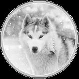 vidéo chiot Husky neige