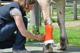 Notfall Pferd München Kolik Verletzung