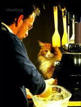 Mike, watson, cattery, repère maine coon, maine coon, cats, felines, félins, beauvechain, belgium, belgique