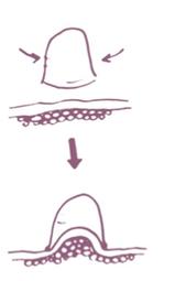 brossage lymphatique, brossage à sec, anti-cellulite, cosmétik & sens