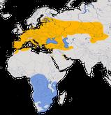 Karte zur Verbreitung der Pirole (Oriolidae)