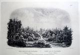 Bild 04 - Waldansicht am Tobihanna-Bache