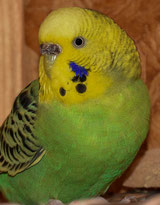 opalin,, hellgrün (Frieda)