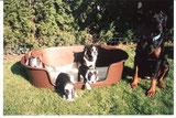 1998 Amy & Future mit ihren Kindern Amore + Augustus, Afra