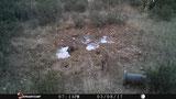 Foto Stealthcam: poca nitidez, no se ven detalles