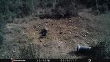 Foto Stealthcam: en el centro de la foto hay un cuervo pero no se distingue