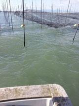 有明海「風で舞う海苔網」