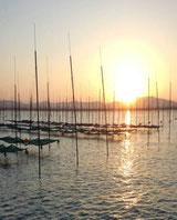 朝の有明海(その2)