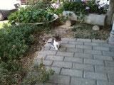 Kätzchen sucht Platz