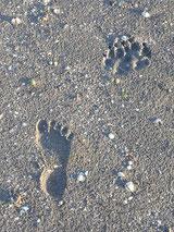 Fußabdrücke im Sand von Mensch und Hund