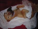 Hund schlafen Hund traeumt Hundehimmel