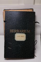 Herbarium Östen Wallin