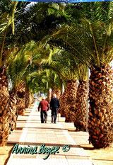 © Annina Boger | Orangenblütenküste | Impressionen zum Roman | IRRFAHRT BIS LIEBE