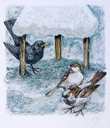 Amsel und Sperlinge